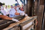 Senasag inicia ciclo de vacunación contra brucelosis bovina en el departamento de Beni