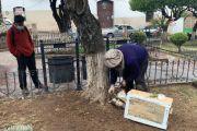 Sucre: Extraen una colmena de abejas de las raíces de un árbol del centro de Sucre